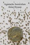 Семена лофанта анисового