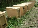 - пчелопакеты
